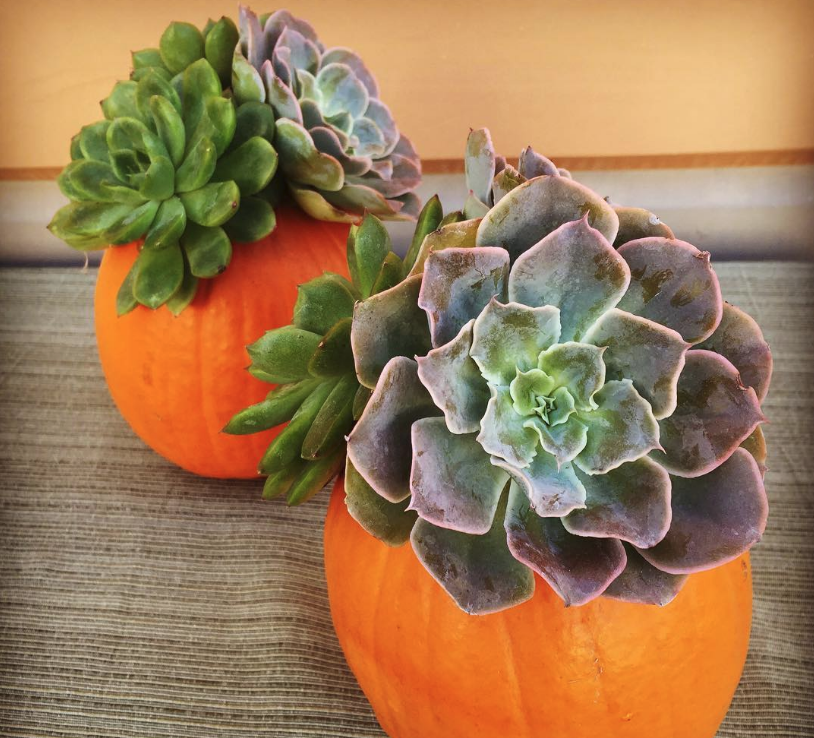 You'll Refuse to Carve Scary Pumpkins Seeing These Gorgeous Ideas with Succulents, фото № 7