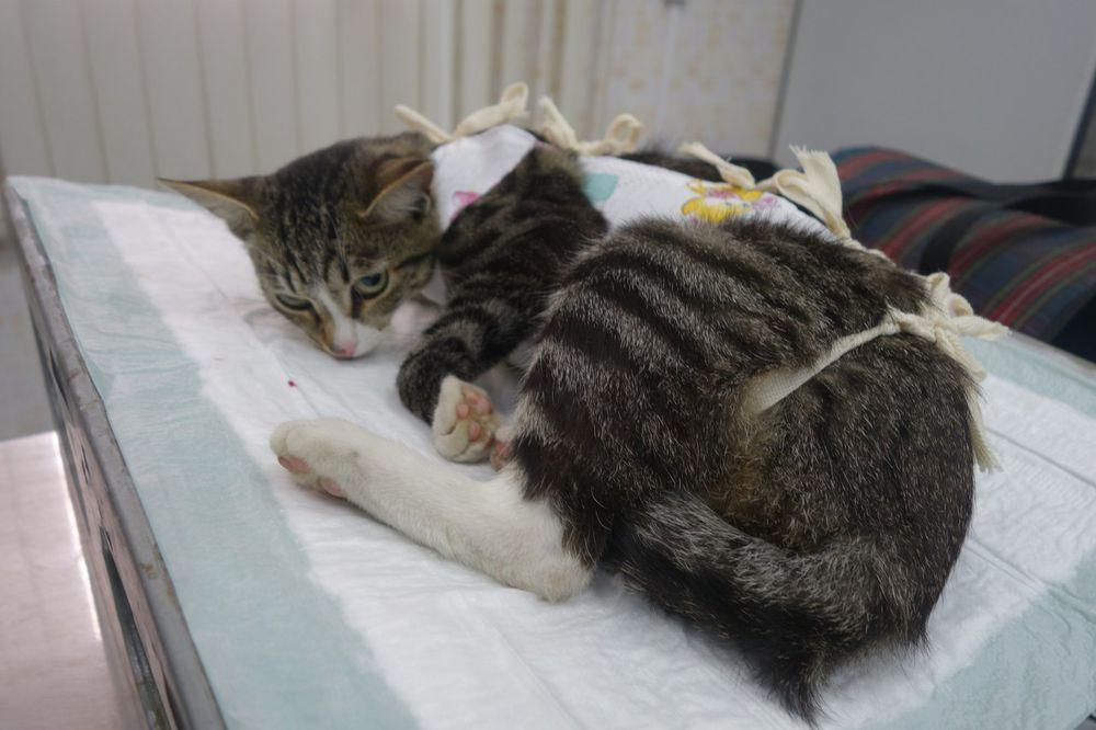 помощь, благотворительность, прием работ, для кошек, помощь собаке