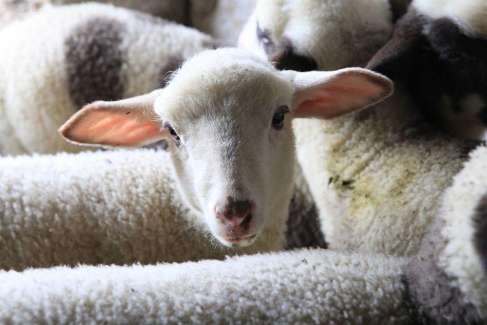 шерстяные одеяла, валяние из шерсти
