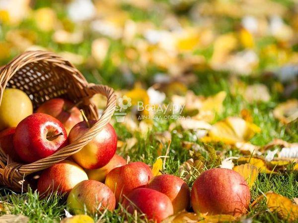 Сентябрь не за горами | Ярмарка Мастеров - ручная работа, handmade