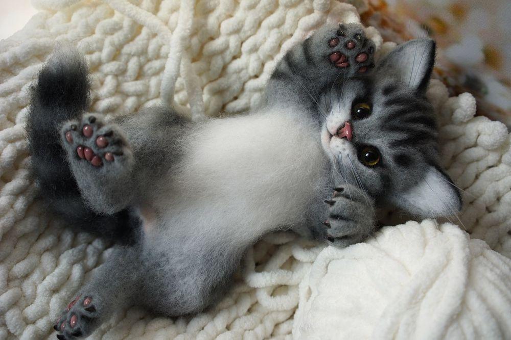 Картинки котик для тема место