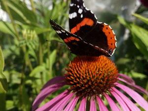 Бабочка в одежде и окружении, что символизирует. Ярмарка Мастеров - ручная работа, handmade.