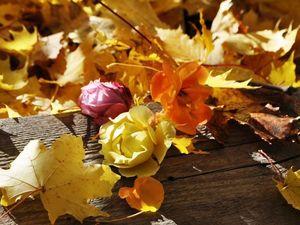 Сад на экваторе осени. Золотые деньки. Ярмарка Мастеров - ручная работа, handmade.