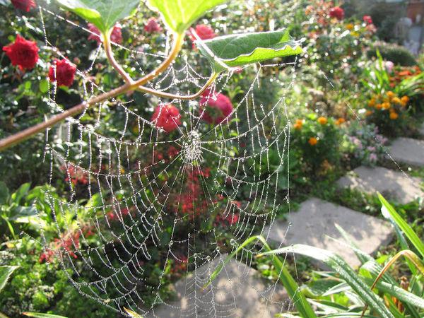 Прогулки по саду. | Ярмарка Мастеров - ручная работа, handmade