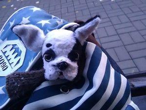 Родился щенок французского бульдога!. Ярмарка Мастеров - ручная работа, handmade.