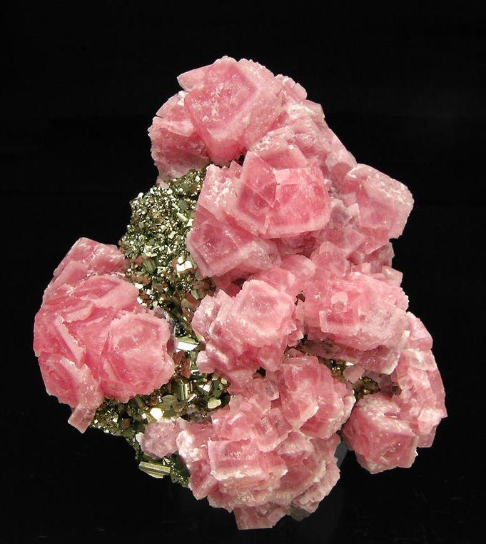 Ахименесы розовые махровые фото