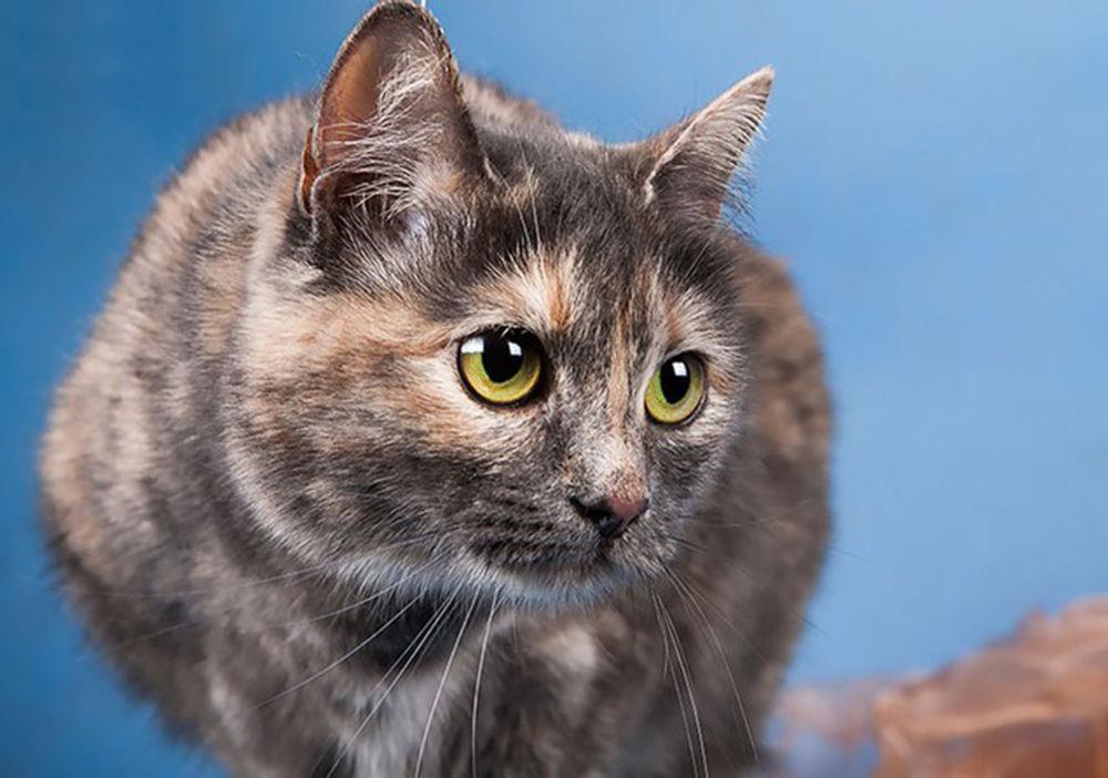 котенок ищет дом, уют