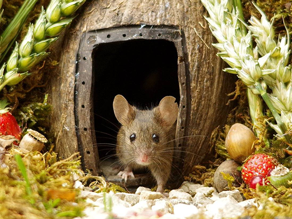 Как фотограф построил деревню для мышек