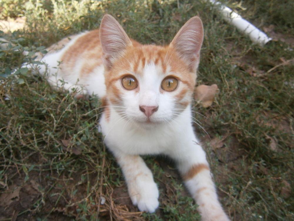 рассказ, животные, котенок, история
