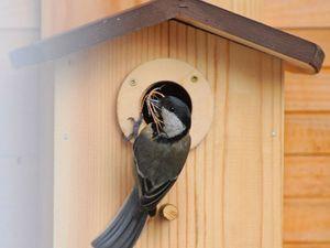 Как правильно вешать скворечники для птиц. Ярмарка Мастеров - ручная работа, handmade.