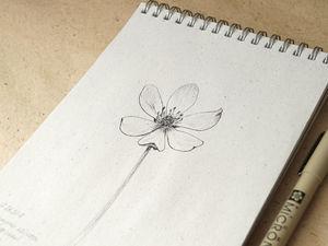 Графика и ботаника — делюсь впечатлениями. Ярмарка Мастеров - ручная работа, handmade.