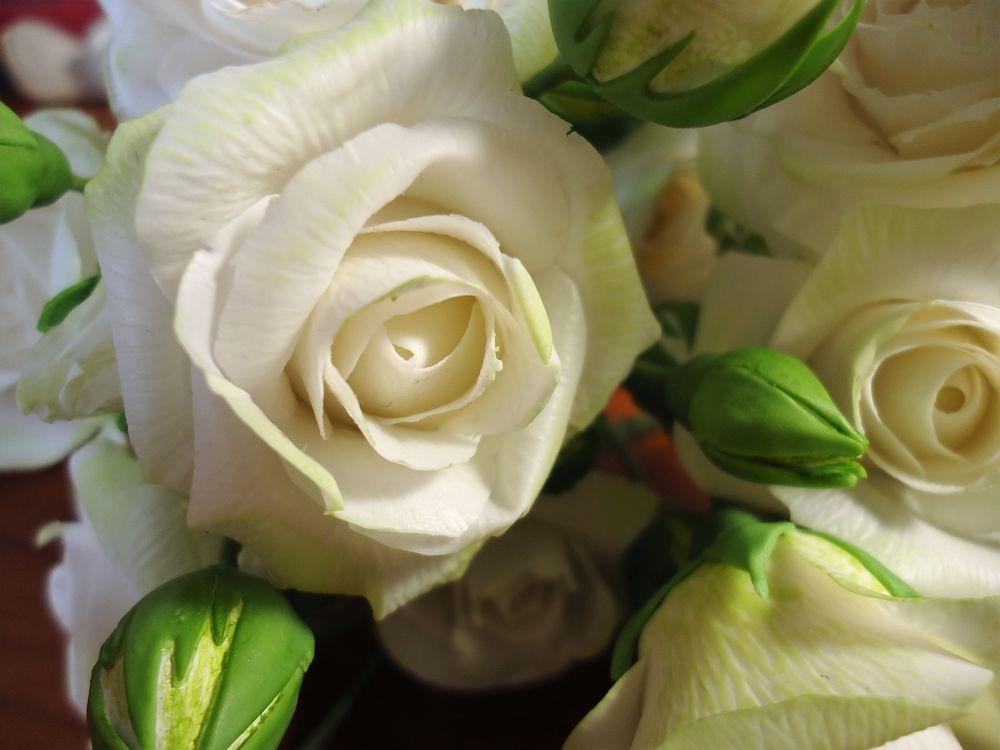 кустовые розы, цветы