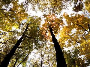 Влияние леса на нас/почему отдых возможен только на природе. Ярмарка Мастеров - ручная работа, handmade.
