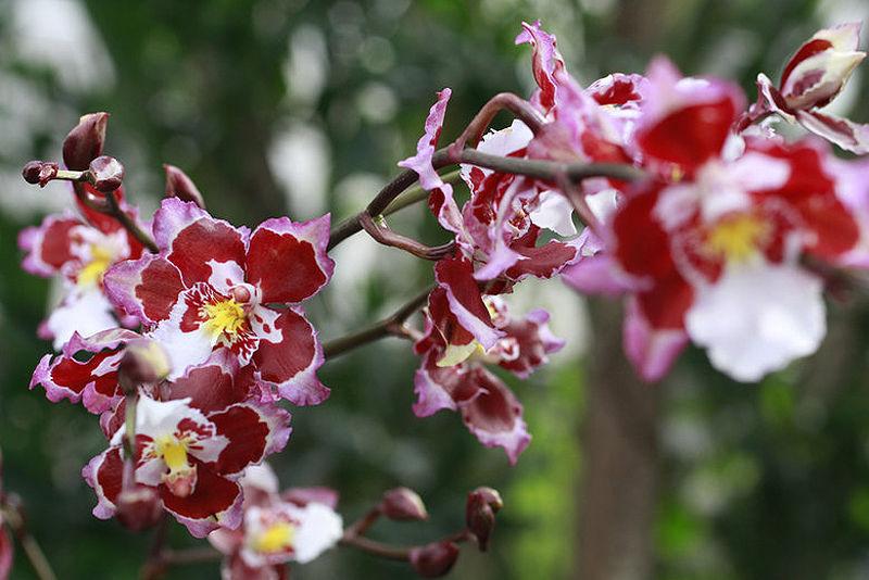 Что говорят цветы.....!!!!, фото № 7