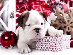 Завтра 13 декабря Ярмарка у Ксении !!! Добро пожаловать !!!. Ярмарка Мастеров - ручная работа, handmade.