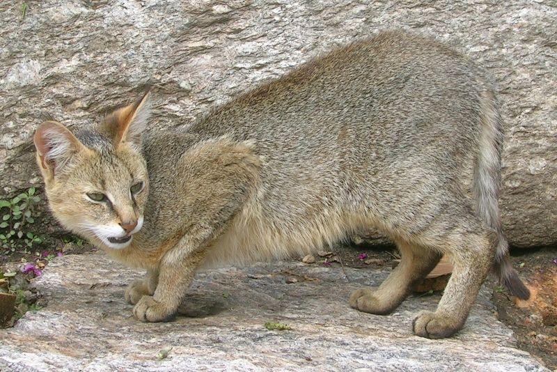 фото котиков