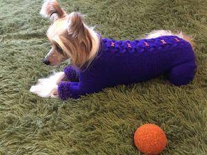 Одевать — не одевать? Вечный вопрос для владельцев собак. Ярмарка Мастеров - ручная работа, handmade.