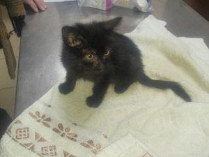 Черный котенок 2 - 2,5 месяца!. Ярмарка Мастеров - ручная работа, handmade.