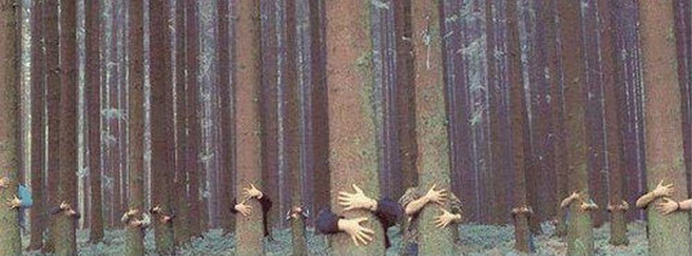 липа, лес
