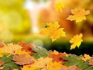 Расписание аукционов на осень. Ярмарка Мастеров - ручная работа, handmade.