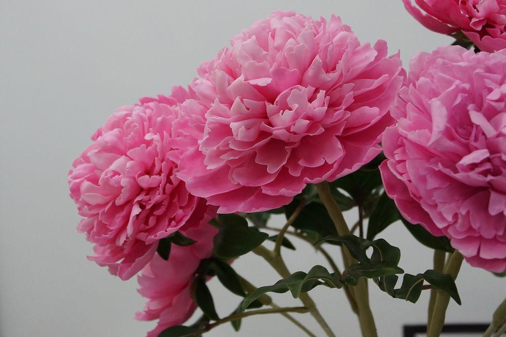 мастер-класс, белла роза