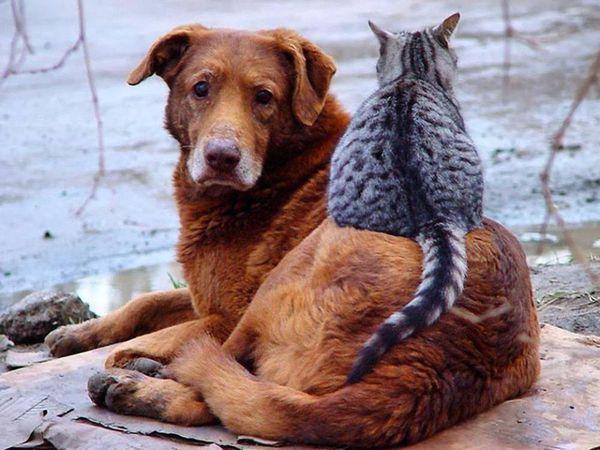 Подарите подарок животным из приюта - Сбор помощи животным Кожуховского приюта | Ярмарка Мастеров - ручная работа, handmade