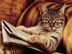 Плюсы и минусы ошейников для кошки. Ярмарка Мастеров - ручная работа, handmade.