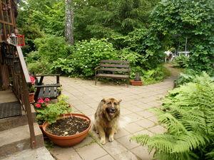 Воскресное утро в моем березовом саду. Ярмарка Мастеров - ручная работа, handmade.