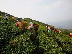 Непальский чай. Ярмарка Мастеров - ручная работа, handmade.