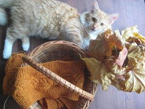 Осенние котики. Ярмарка Мастеров - ручная работа, handmade.