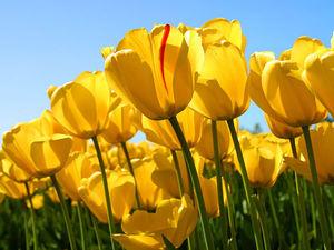 Весна - время обновления | Ярмарка Мастеров - ручная работа, handmade