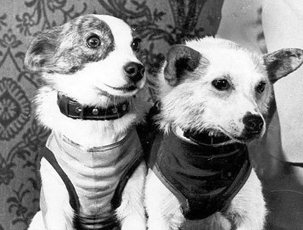 антикварит, винтаж, барахолка, космос, космический костюм, скафандр, собака, собаки, белка, стрелка, собачий скафандр, auctionata, собачий костюм, скафандр для собаки, одежда для собаки, скафандр белки, скафандр стрелки, белка и стрелка, космические собаки, собаки в космосе