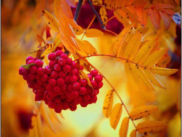 Осенний поцелуй. Новинка магазина, сезонная )))   Ярмарка Мастеров - ручная работа, handmade