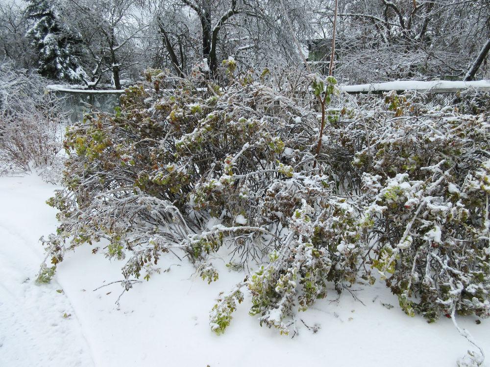 ледяные деревья