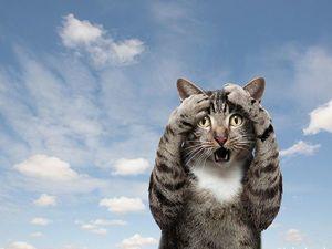 Интересные факты о кошках. Часть 1 (Новостная рассылка) | Ярмарка Мастеров - ручная работа, handmade