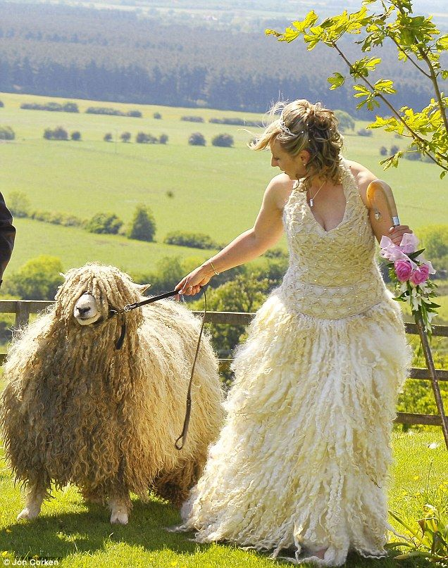 белые овечки