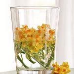 spring-flowers-new-ideas-narcissus2.jpg