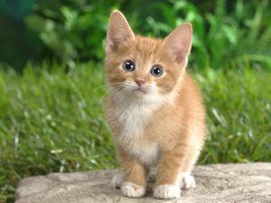 Кошки Нам Радость | Ярмарка Мастеров - ручная работа, handmade