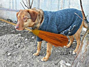 Почему собака не любит дворников?. Ярмарка Мастеров - ручная работа, handmade.