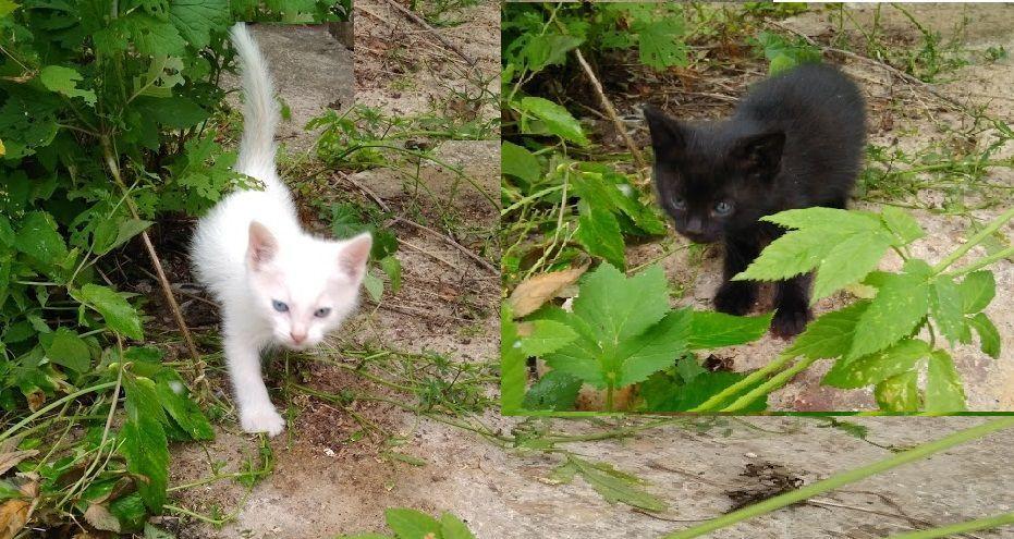 кошка с котятами, белый котенок