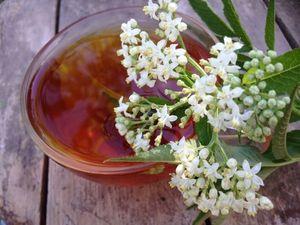 Чай из цветов черной бузины. Ярмарка Мастеров - ручная работа, handmade.
