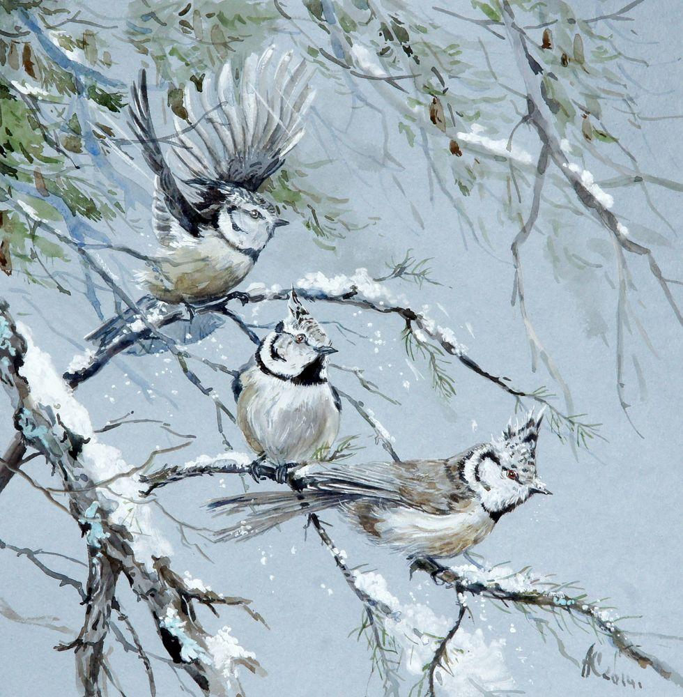 птички акварелью, мороз