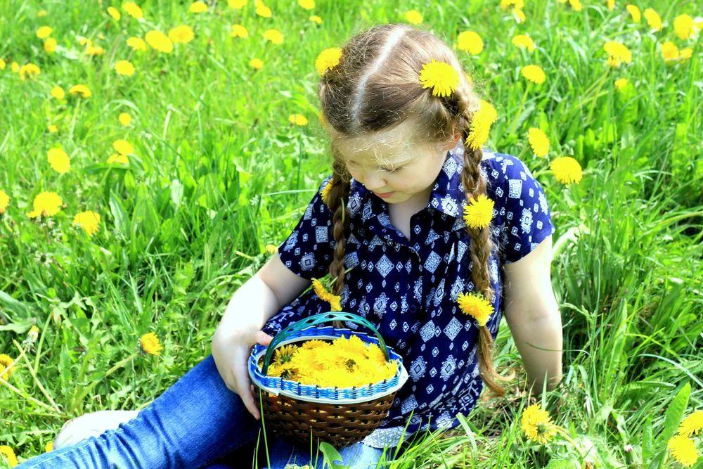варенье из одуванчиков, весны щедрые дары