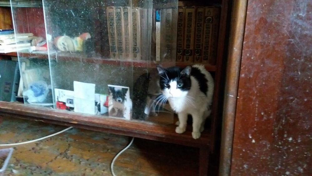 кошки в беде
