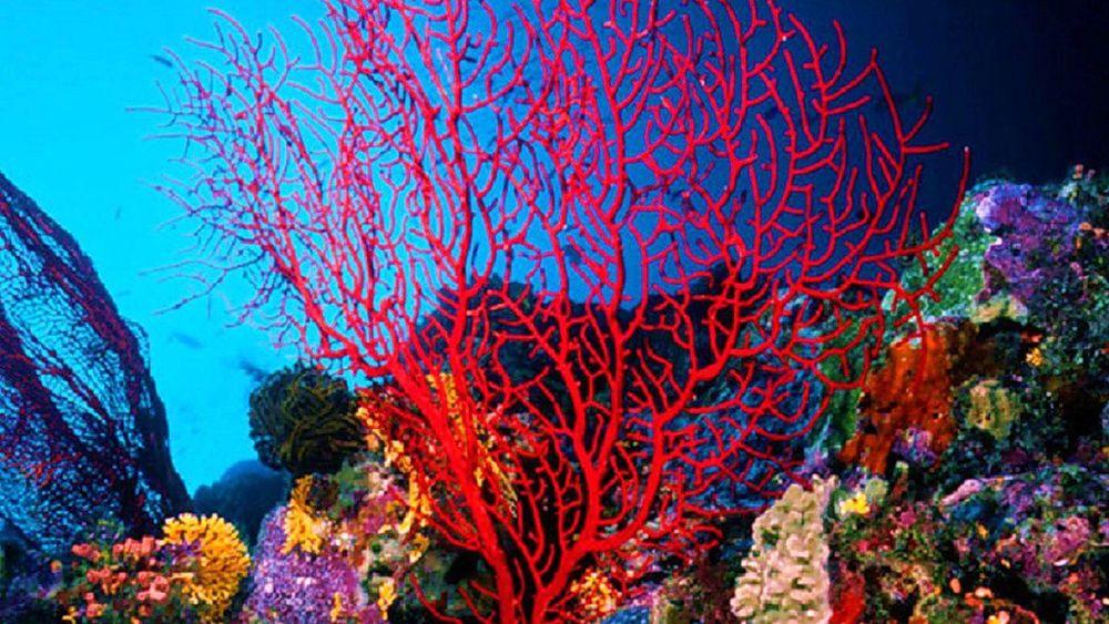 изделия из кораллов, дары моря