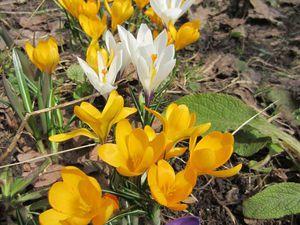 Весна приходит первоцветами | Ярмарка Мастеров - ручная работа, handmade