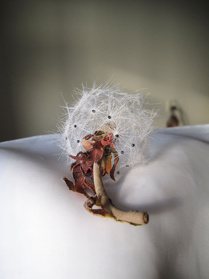 одуванчик, белый цветок