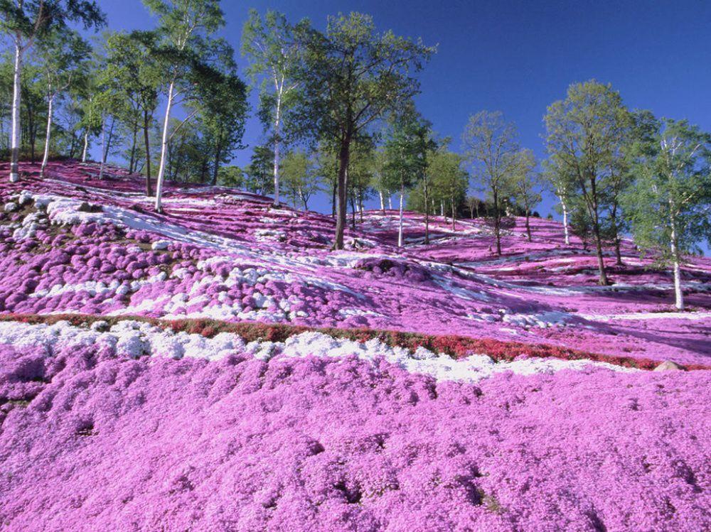 Краски природы: 49 впечатляющих фотографий, фото № 25