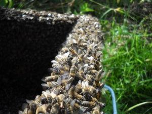 Пчелиные чудеса. Ярмарка Мастеров - ручная работа, handmade.