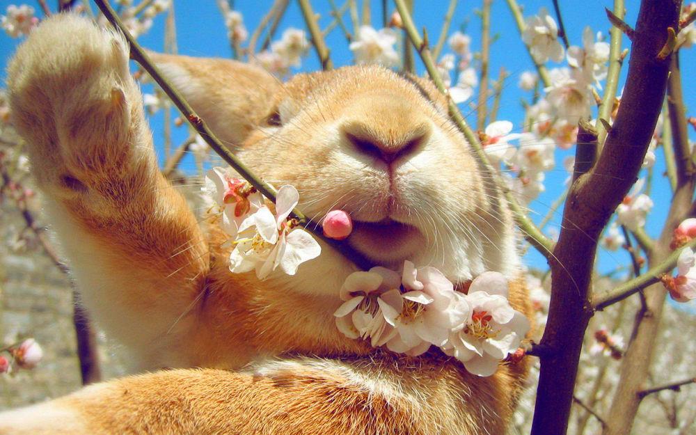 весна, нежность